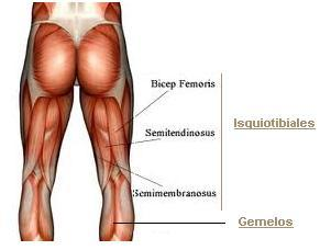 Musculos-implicados