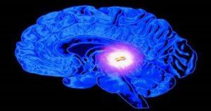 alma-cerebro 3